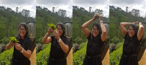 Christine tea plucking